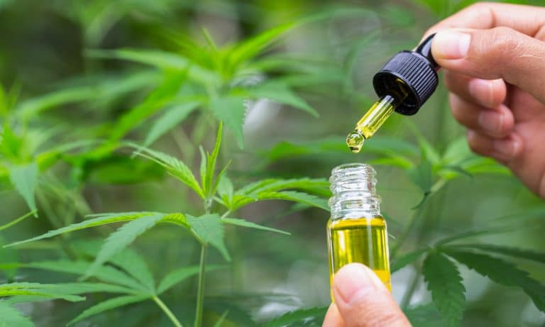 Why CBD K2 Products are famous nowadays